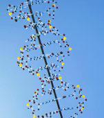 adn et telomeres