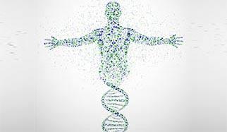 ADN longévité