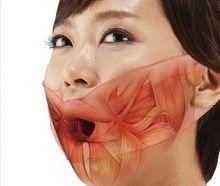 muscle du visage
