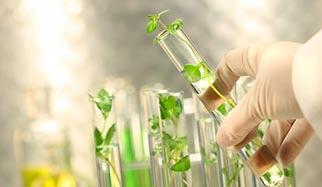 plantes � action hormonale