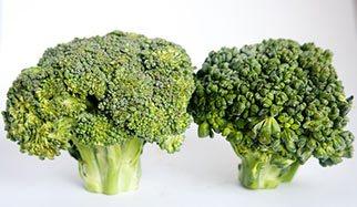 brocolis riches en vitamine K