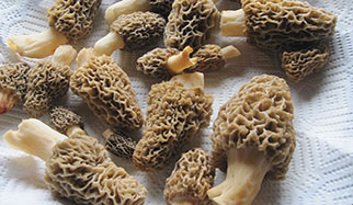 les champignons contiennent du selenium