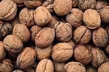 walnuts-986381_640