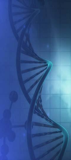 chromosome ADN