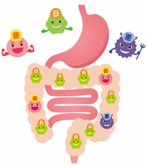 intestin et bactéries