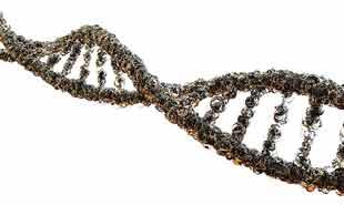 ADN et gênes