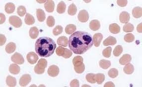 globules rouges et blancs